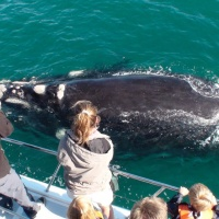 WHALE WATCHING - come close to these gentle giants on a boat
