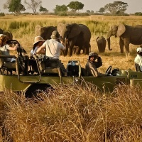 SAFARI - witness the Big Five - an unforgettable experience